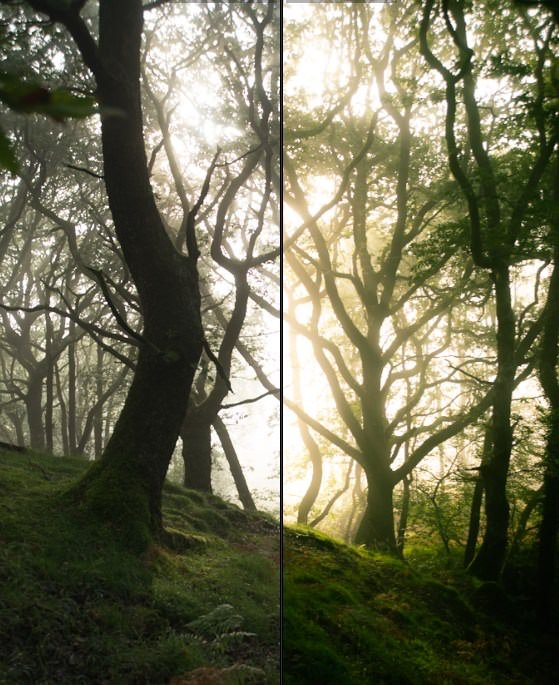 Forest Photography Lightroom Presets
