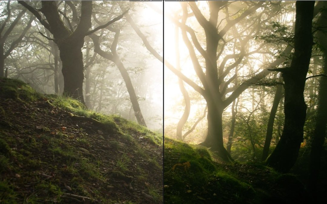 Get Our Forest Photography Lightroom Presets