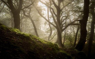 Ultimate Guide to Forest Photography – Tips and Tricks