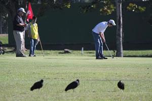 Campo de golfe do Plaza Itapema Resort & Spa irá receber  três torneios da modalidade no próximo fim de semana. Foto: Geisa Nagano | Divulgação Agência A