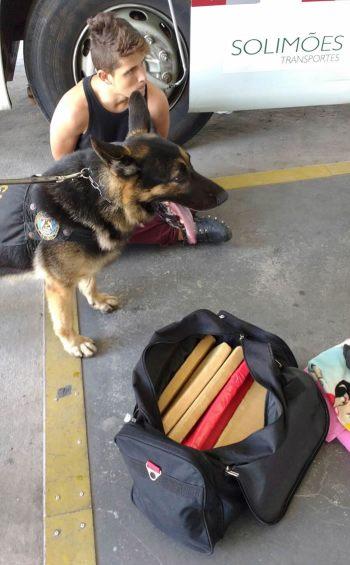 Cachorro do canil da PF farejou a droga que levou R.C. para a cadeia. (GMBC/divulgação)