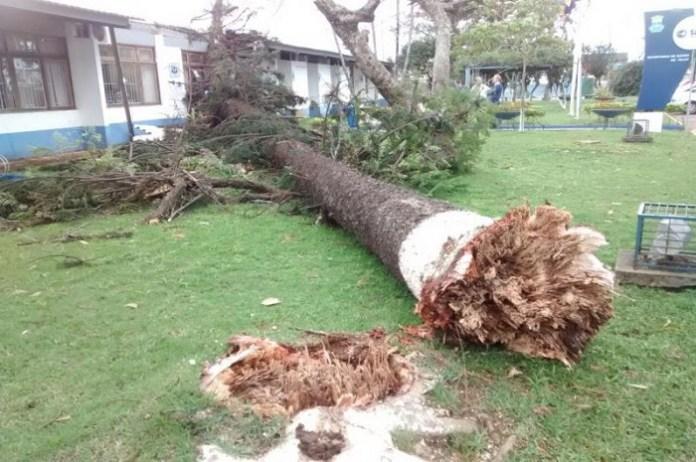 Vento forte provoca queda de árvore na recepção da Secretaria de Saúde