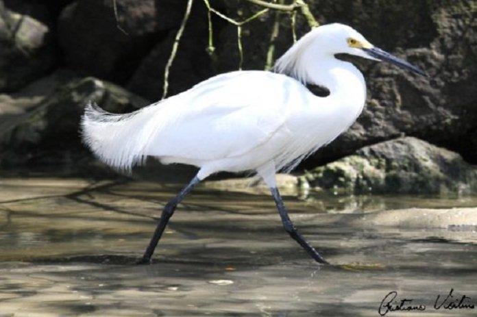 Evento sobre observação de aves ocorre neste fim de semana