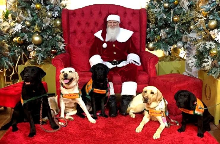 natal papai noel cachorros shopping