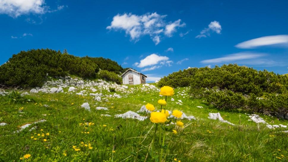 Alm in Tirol