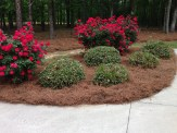 Replaced the dead bushes with new ones