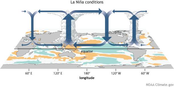 walker circulation, ENSO, La Niña, convection, circulation, walker cell, tropical circulation, Pacific Walker Circulation, Pacific Walker Cell