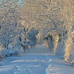 Aggiornamento Outlook inverno 2016-2017 – Allacciate le cinture!