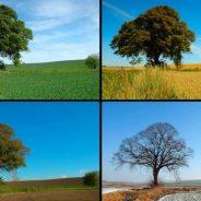 Analisi multi-scala dei cicli climatici basata su serie temporali climatiche e fenologiche