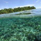 Acidificazione degli Oceani, alcune serie storiche di breve e lungo periodo