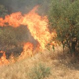 Il Declino Globale delle Aree Soggette a Incendio: Alcune Riflessioni in Chiave Storica, Etnografica ed Ecologica