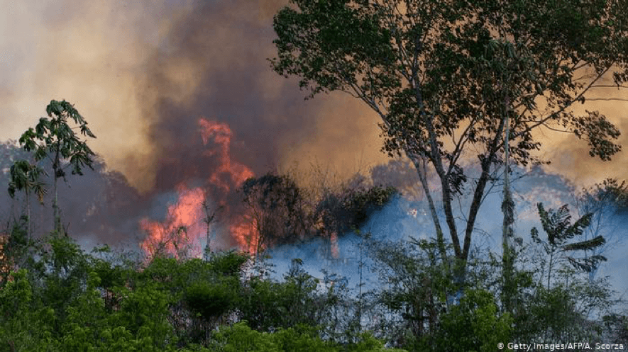 Similarities and Differences in the Forest and Bush Fires in Brazil and Australia