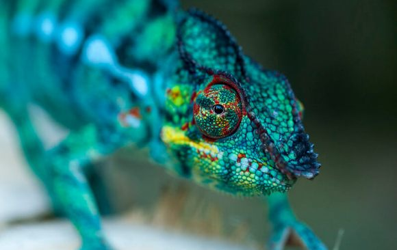 One in Four Species in France is Endangered, Despite Biodiversity Protection Efforts