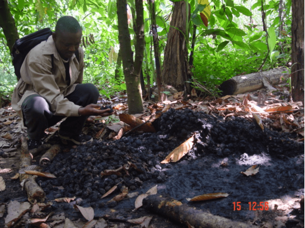 Best Climate Practice Nigeria: Nigerian Conservation Foundation (NCF)