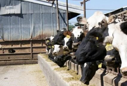 Van Warmerdam Dairy Digester 2