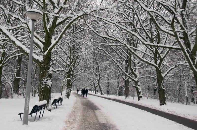 Vondelpark Amsterdam | Winter in Amsterdam | Clink Hostels