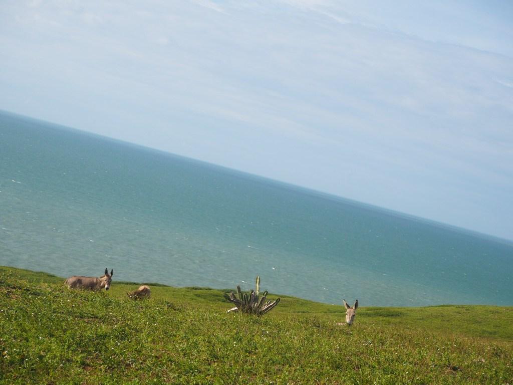 Balada à Jericoacoara, Ceara, Brésil. Encore des ânes !