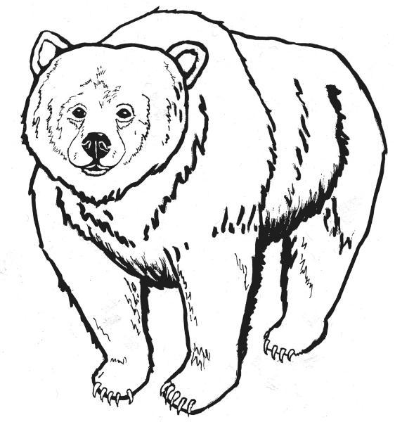Grizzly Clipart - ClipArt Best (562 x 600 Pixel)