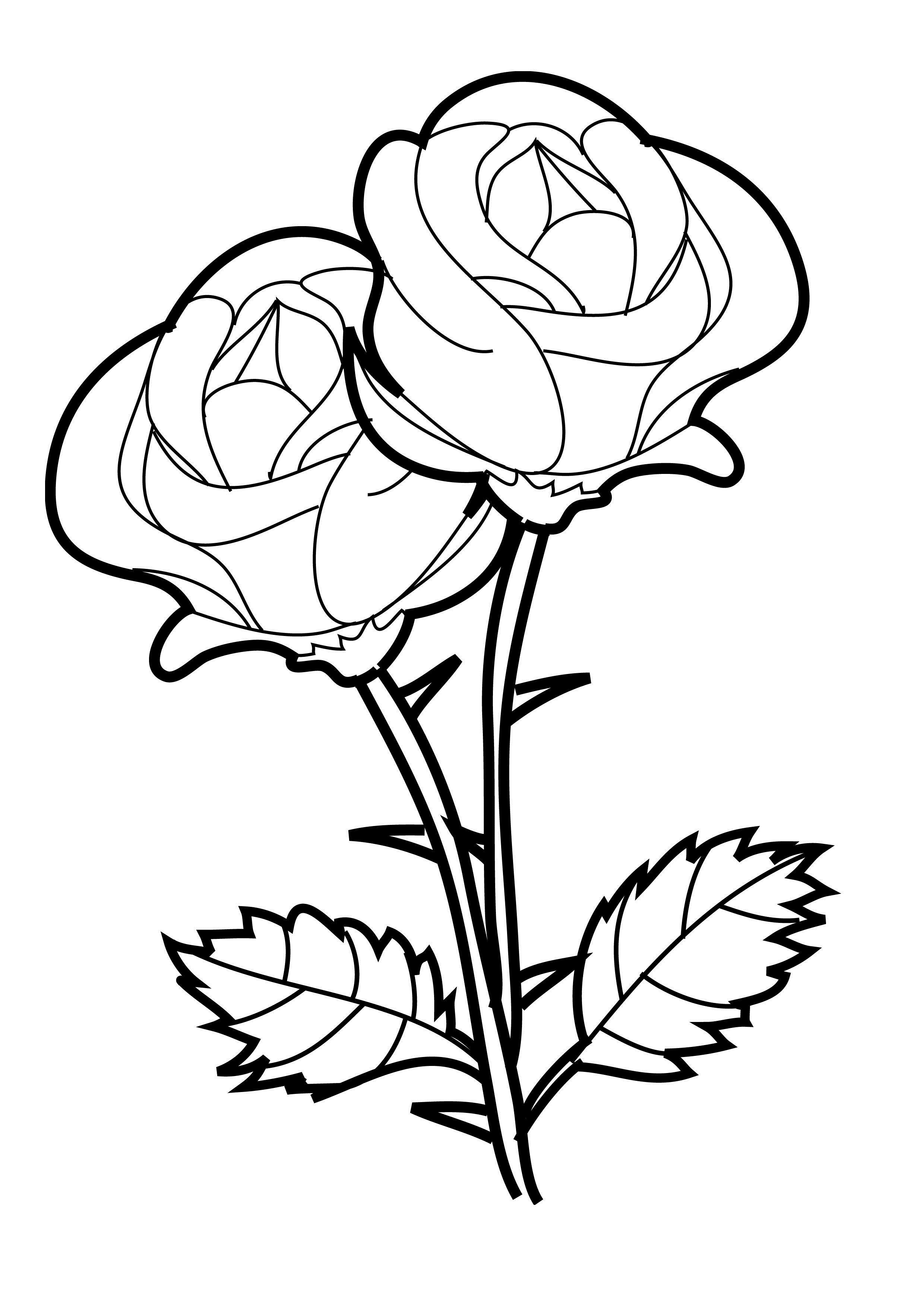 Rose Vines Drawings Clipart Best Special Coloring Pages Draw A