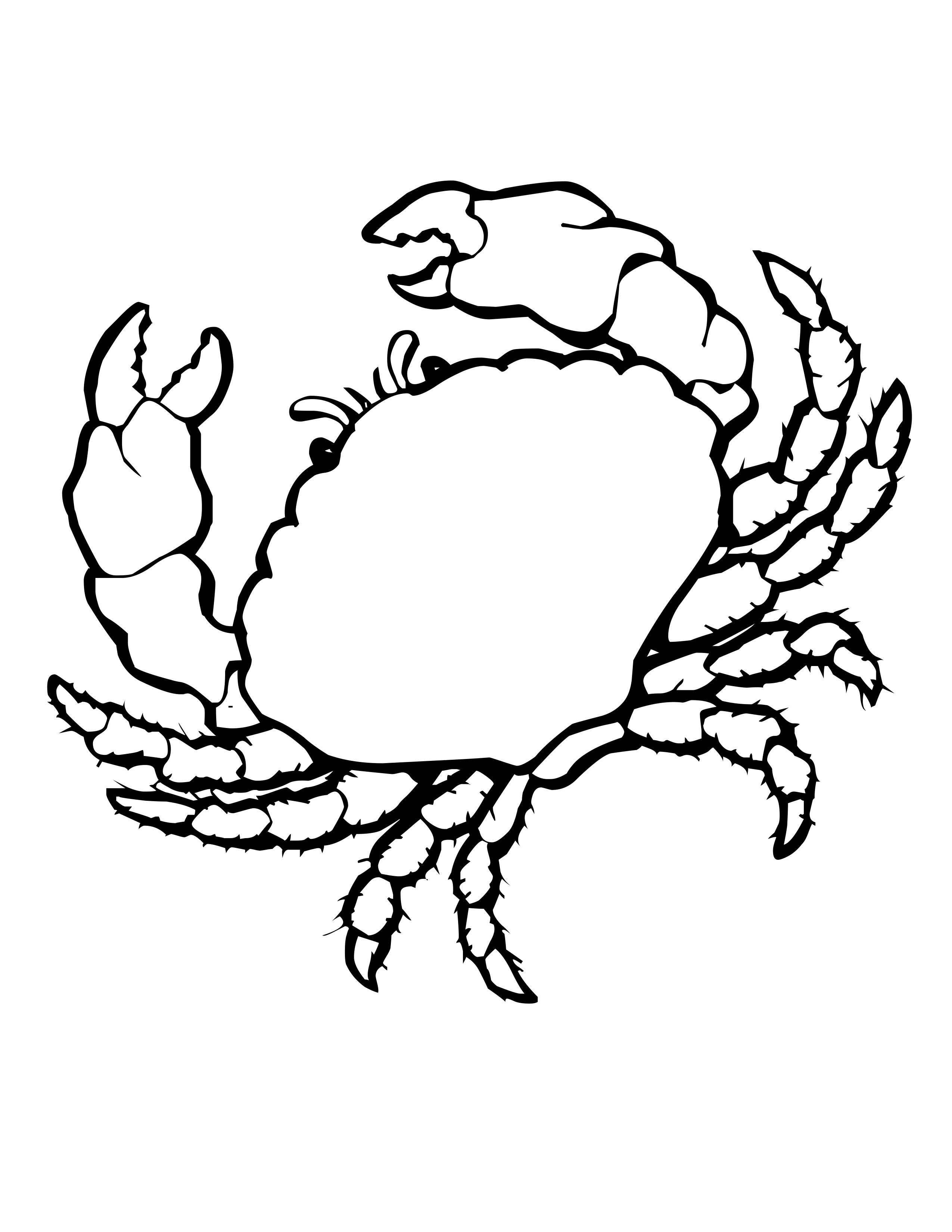 sea shell coloring pages and shells colouring pages