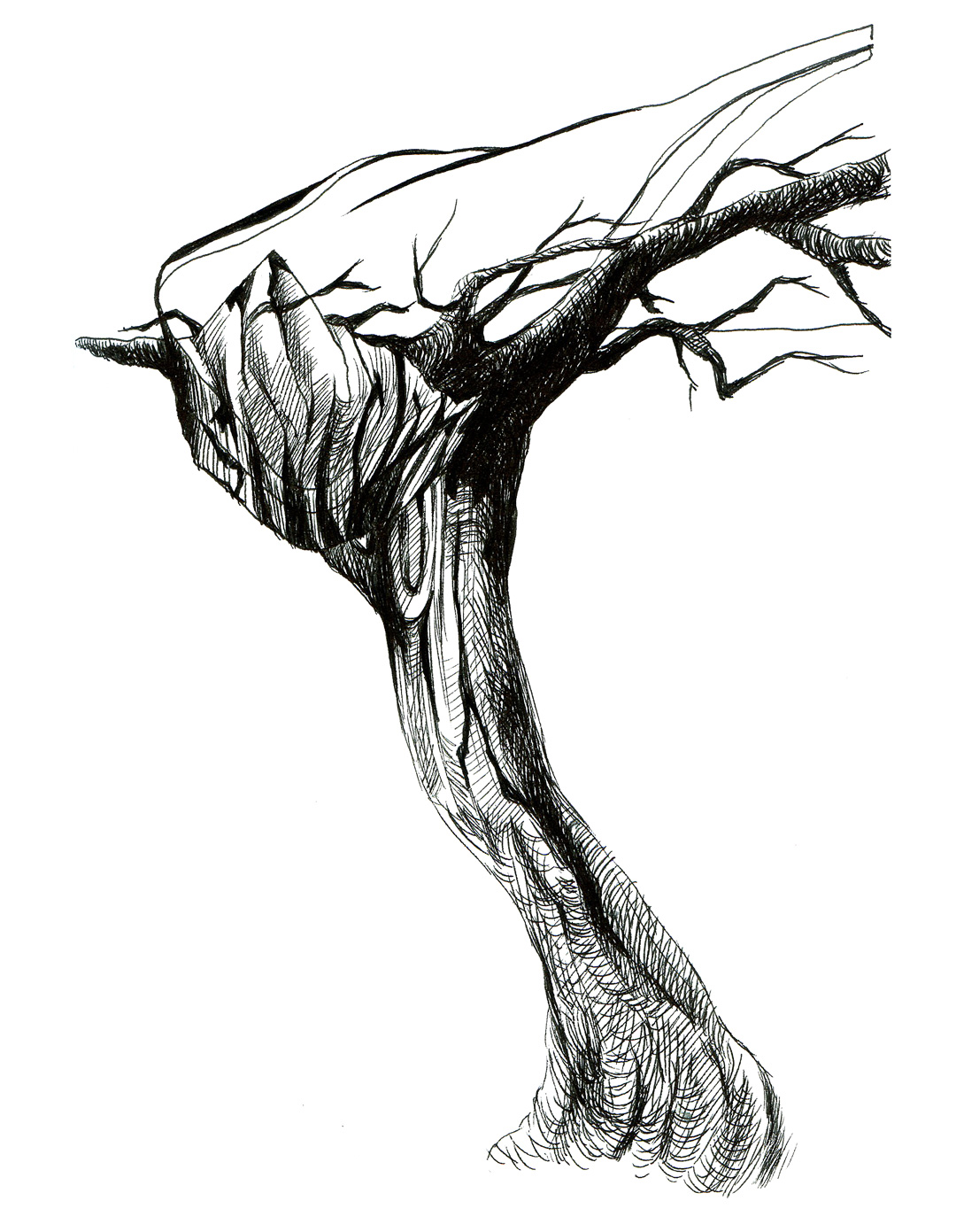 Bare Tree Sketch