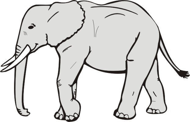 black and white pictures of elephants clipart best