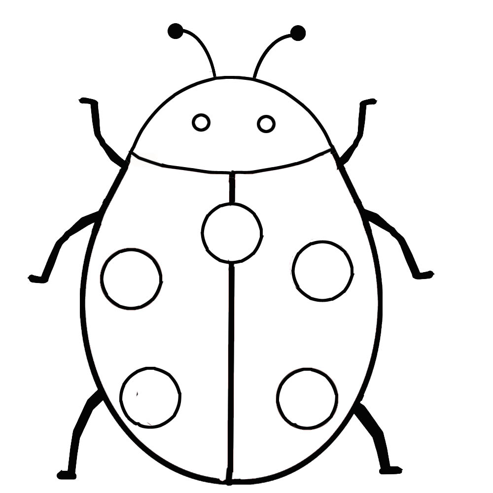 drawing to print animals insects ladybug 36982