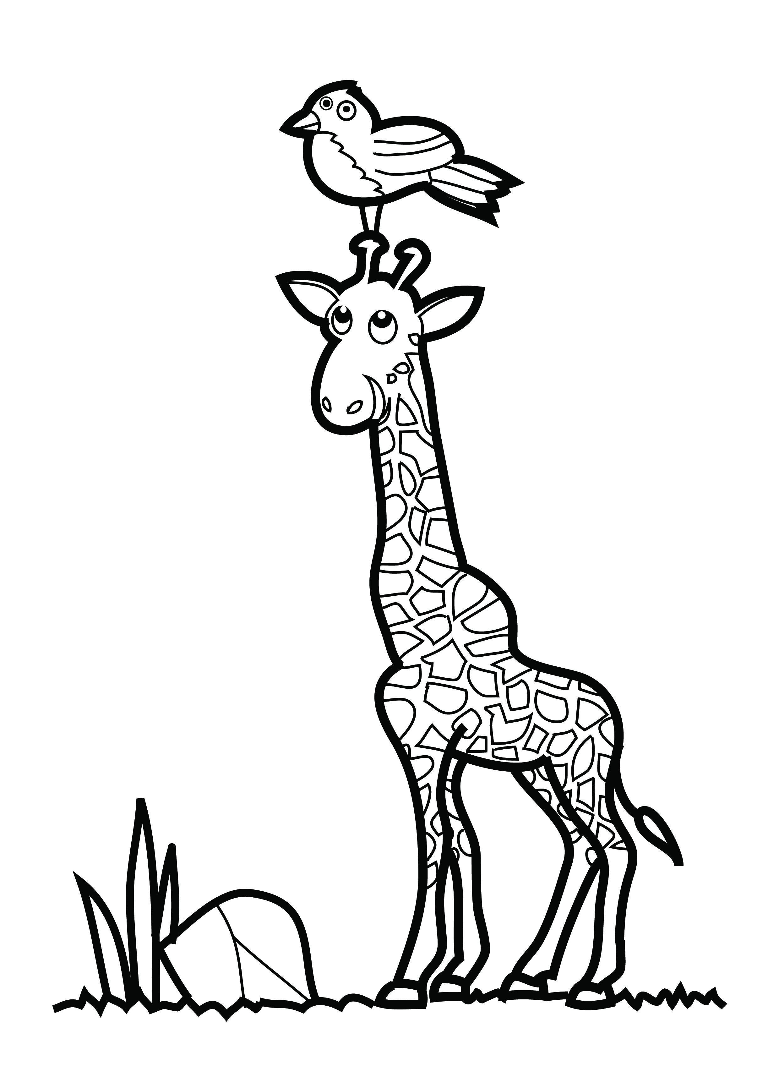 Baby Giraffe Drawing