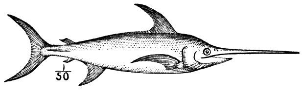 swordfish coloring page free cliparts that you can download to you