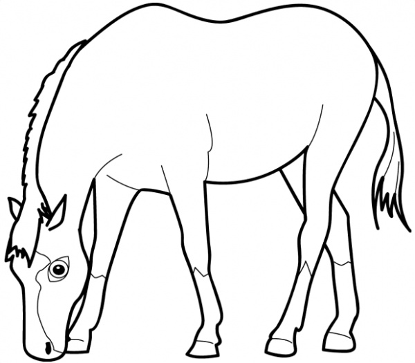 horse head coloring pages clipart best