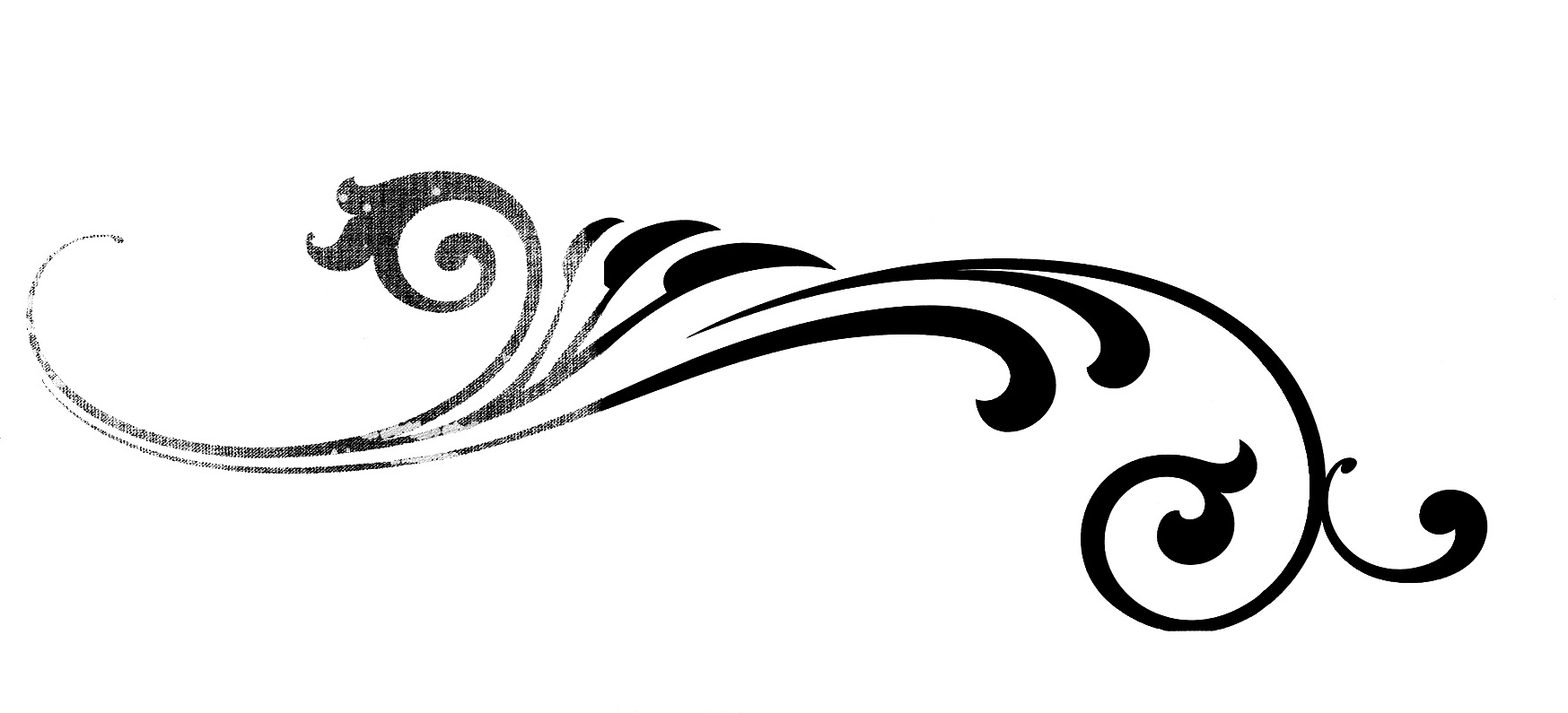 Calligraphy Flourish Vector