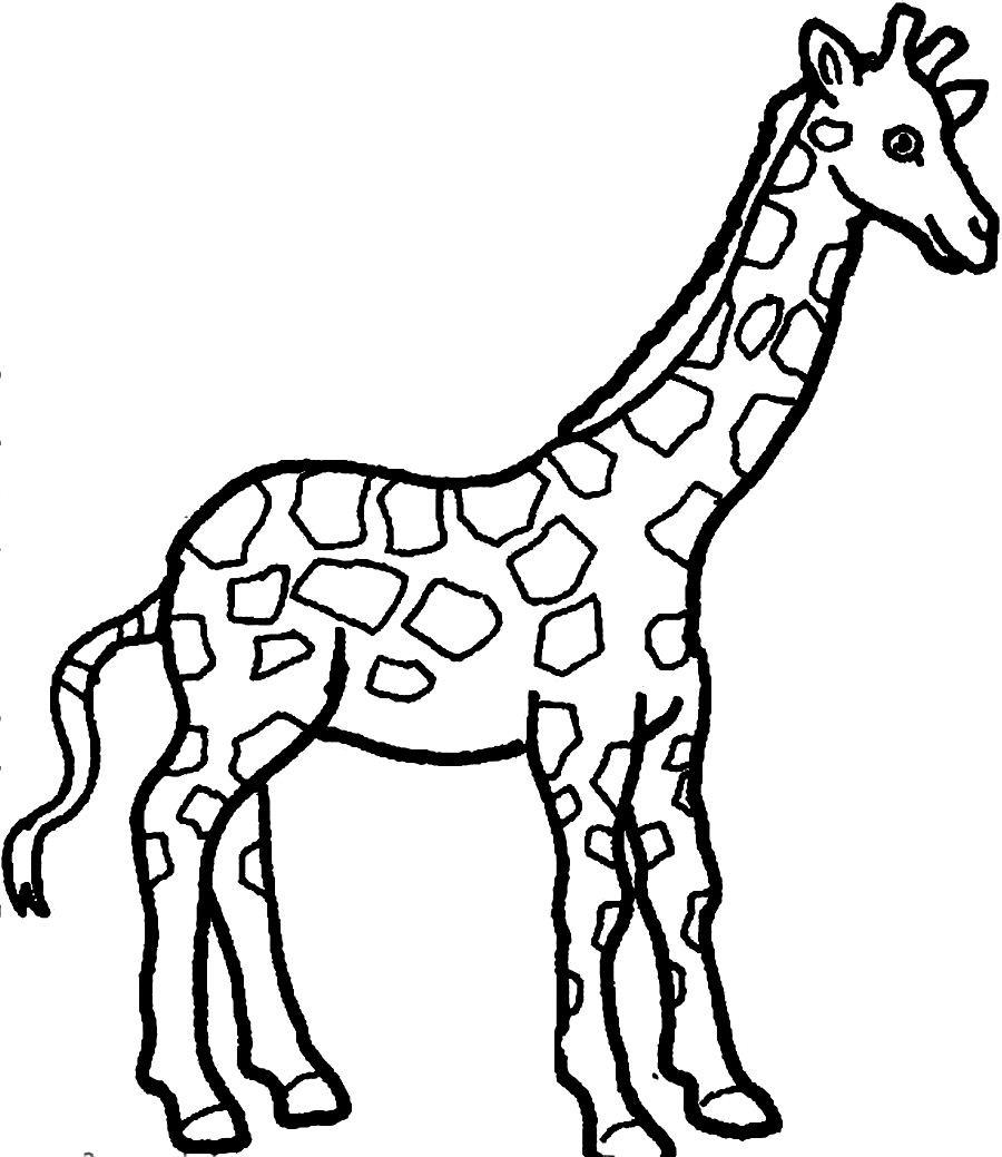 giraffe coloring pages animals coloringpedia