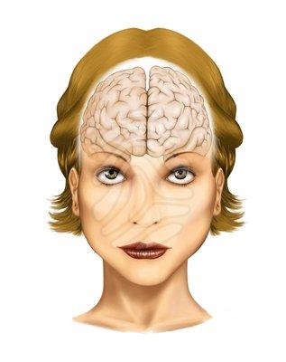 Human brain - clipart # - ClipArt Best - ClipArt Best (317 x 400 Pixel)