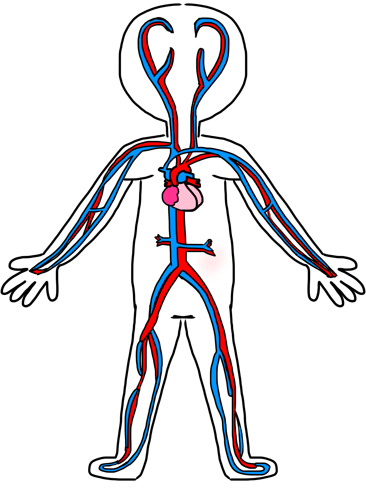 Circulatory System Drawing Kids