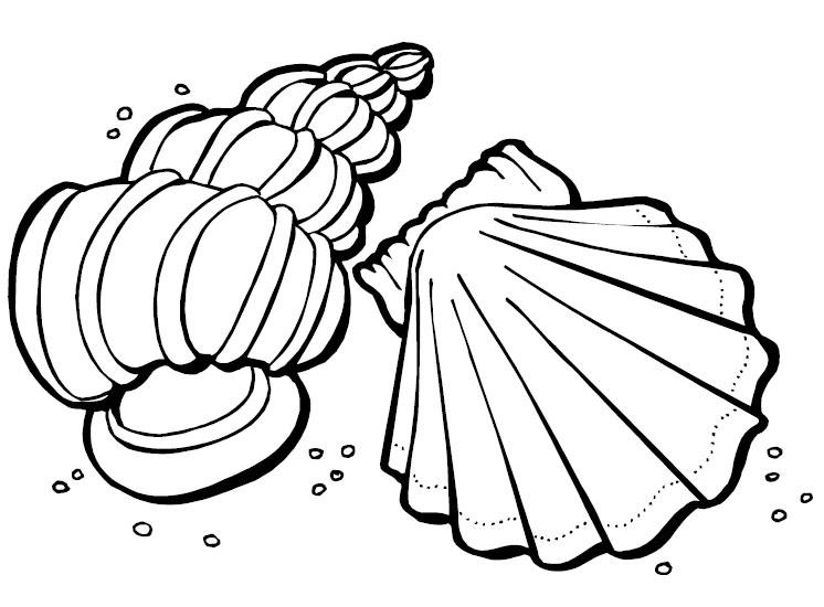 sea shells coloring page