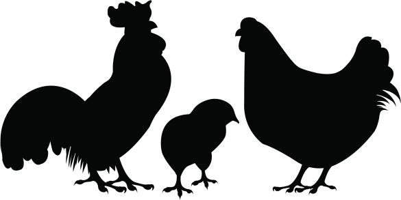 Chicken silhouette clip art - ClipArt Best - ClipArt Best (585 x 293 Pixel)