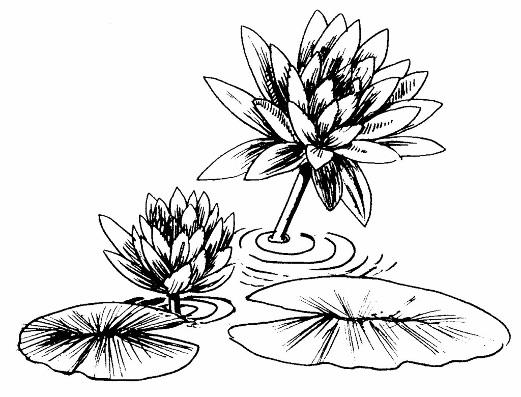 Lily Pad Line Drawing