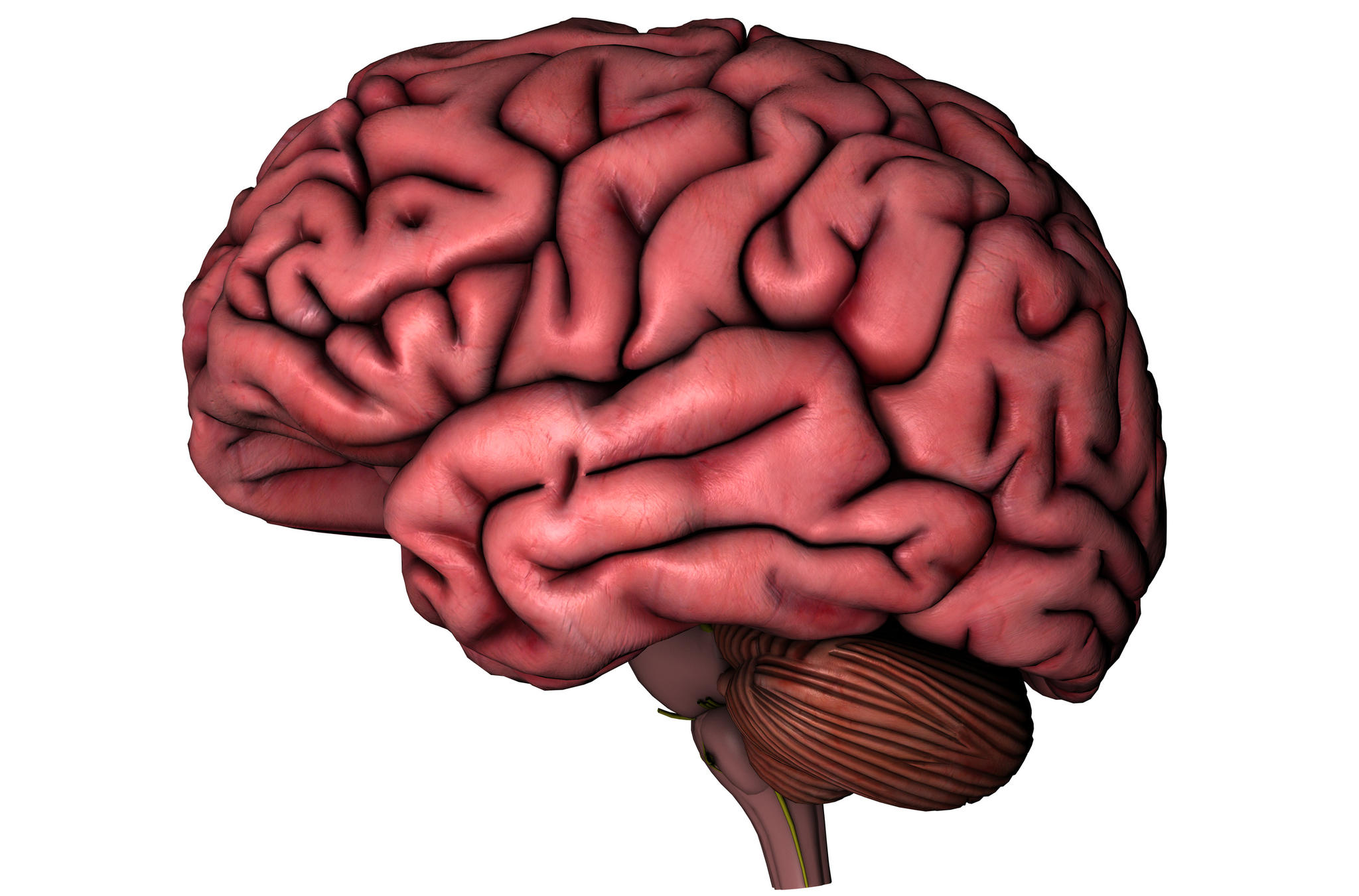 Brain Outline Image