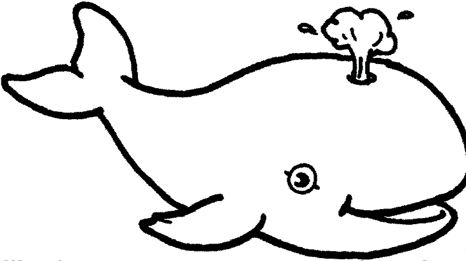 Whale Line Drawing
