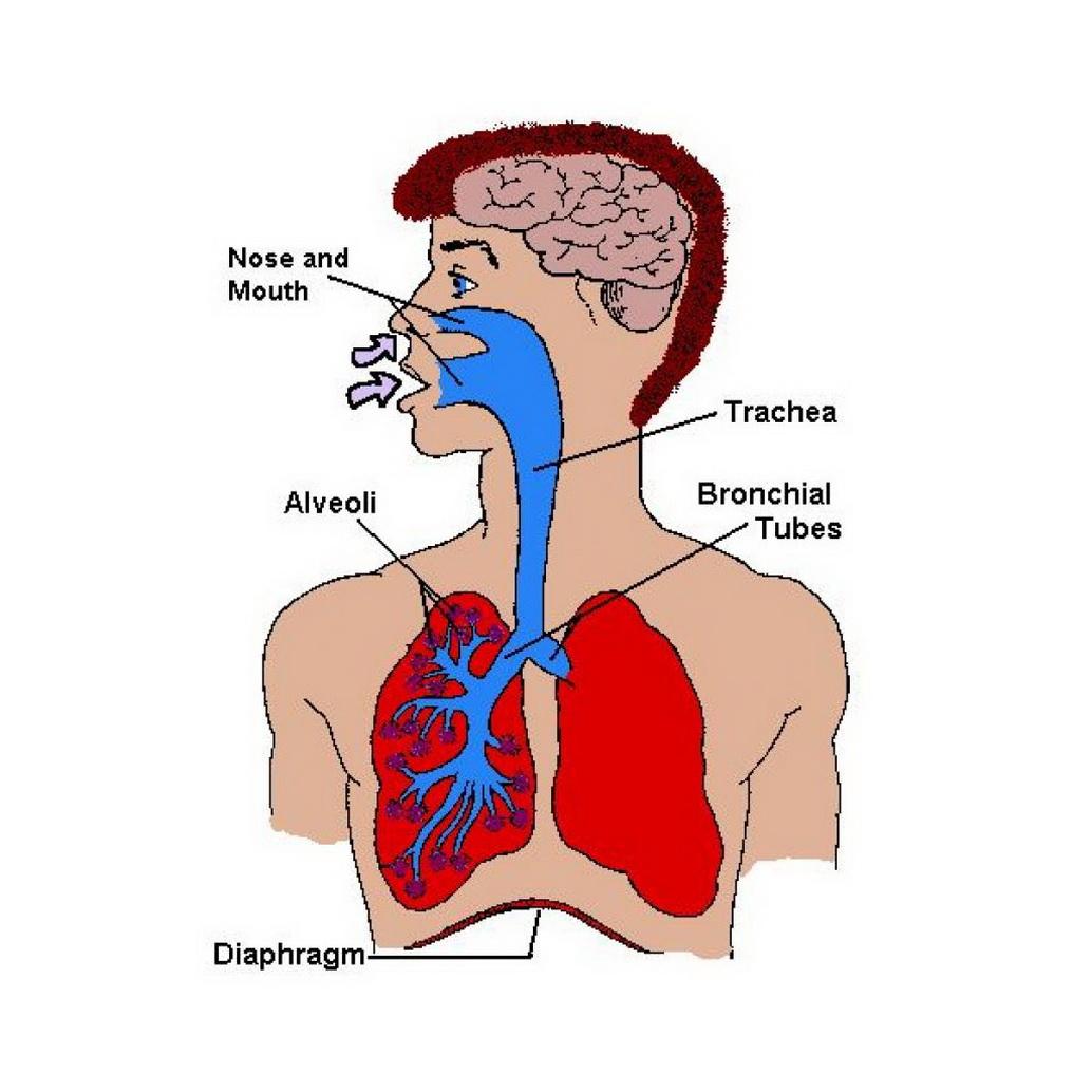 Internal Body Parts Diagram