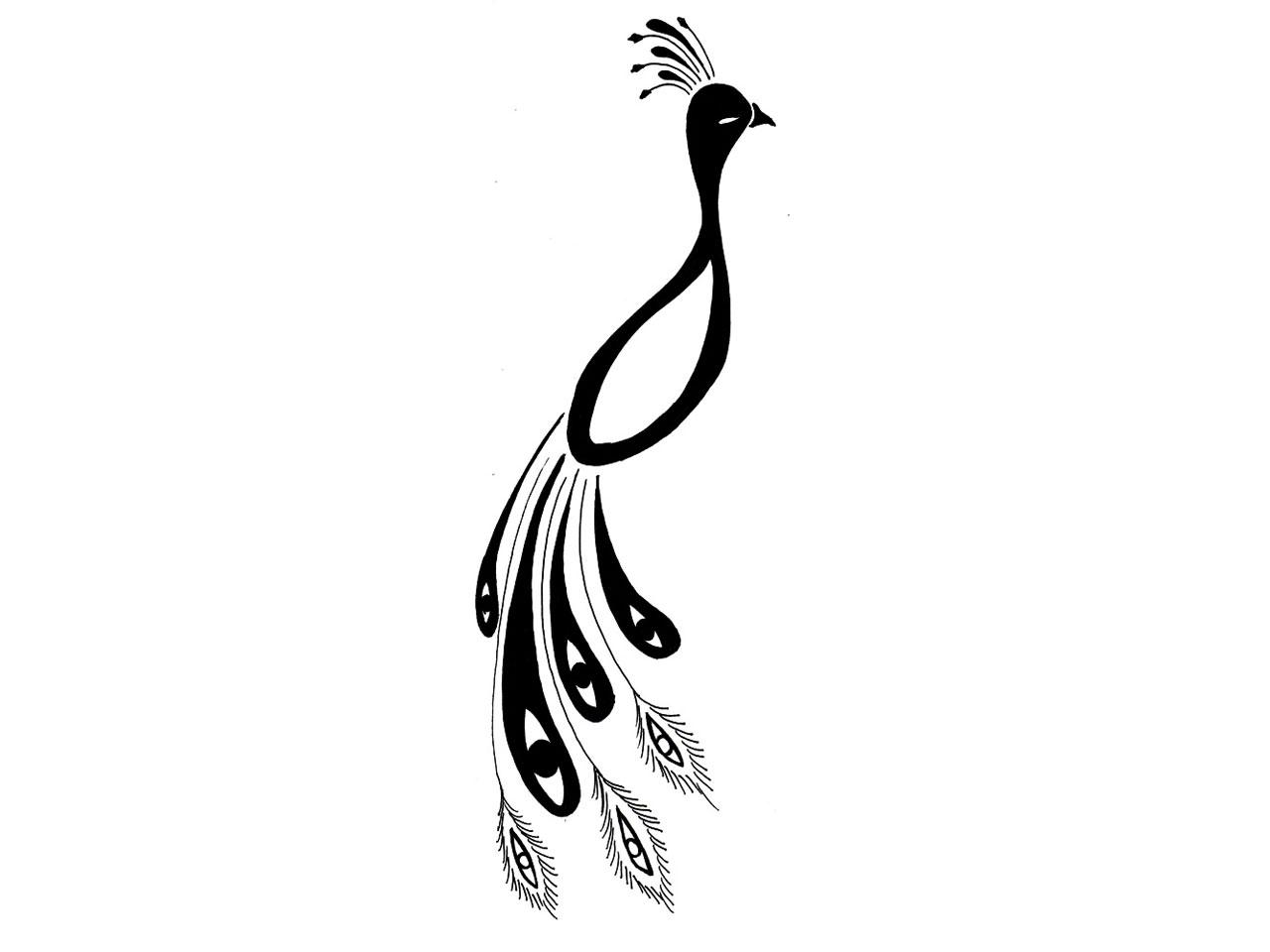 Peacock Vector Free Download
