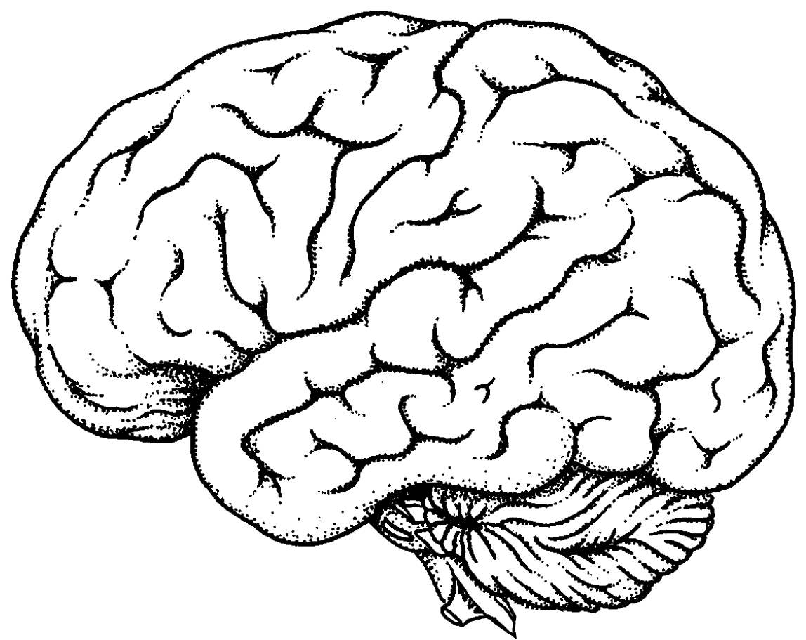 Brain Line Drawing