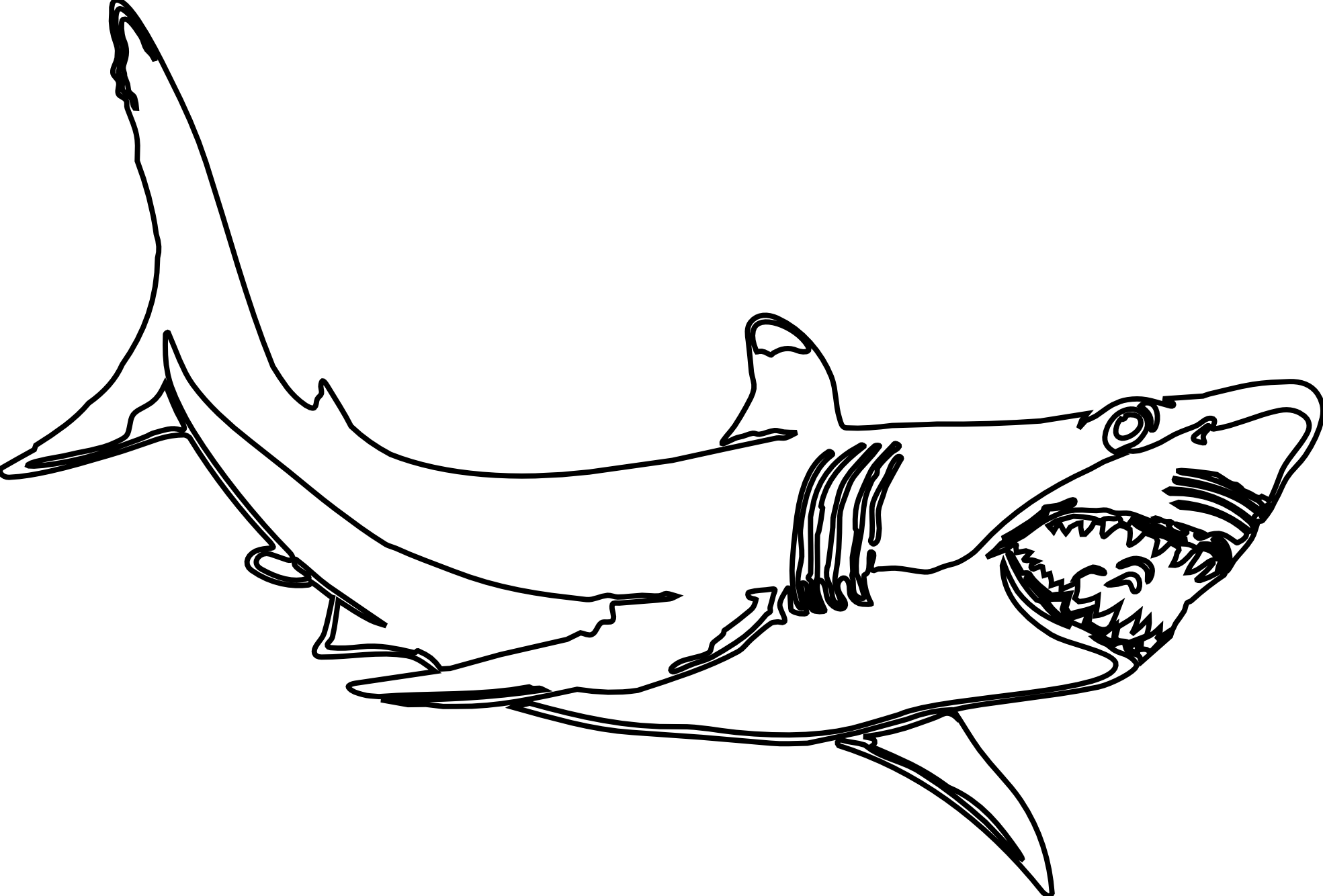Lemon Shark Drawing
