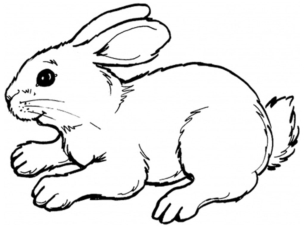 bunny coloring pages coloringmates