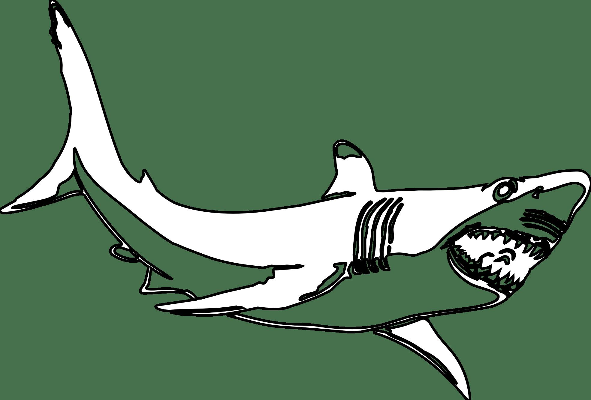 Shark Pictures Clip Art