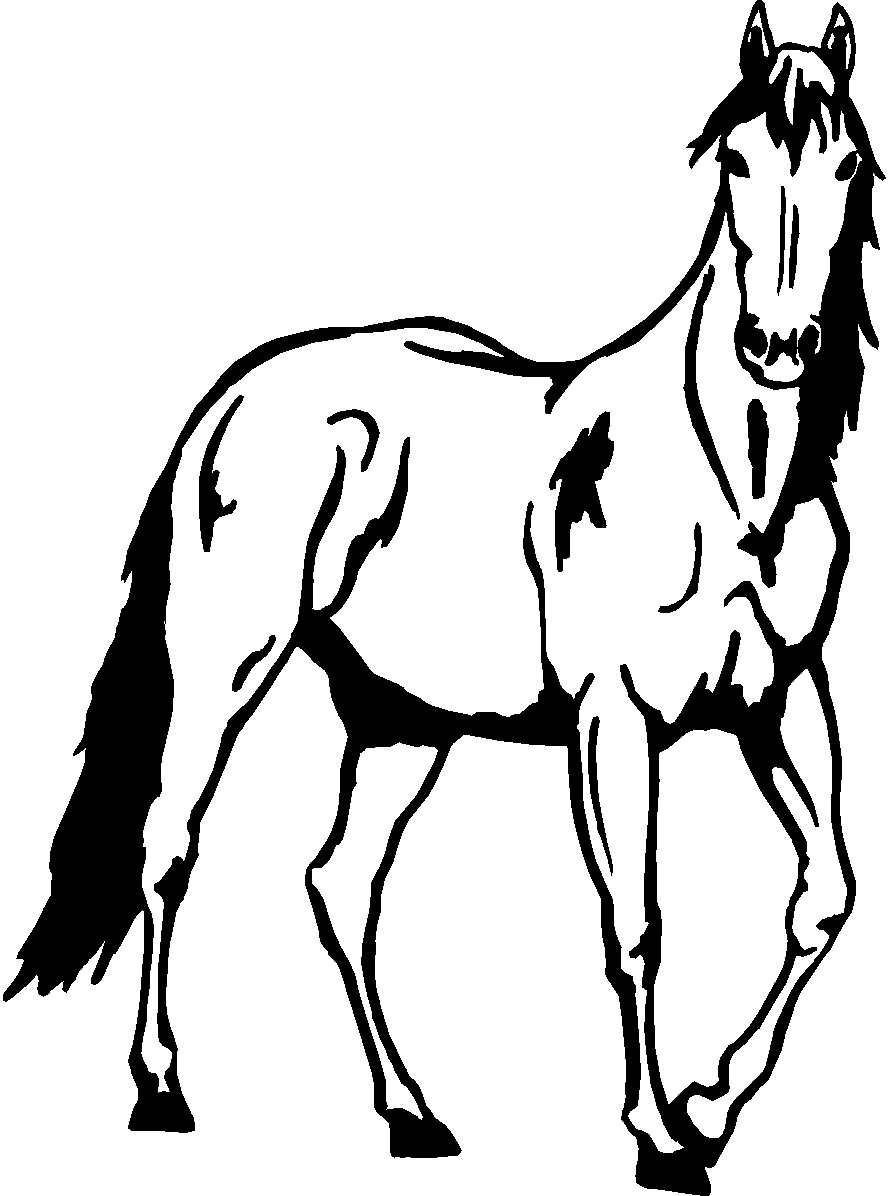 Quarter Horse Head Coloring Pages
