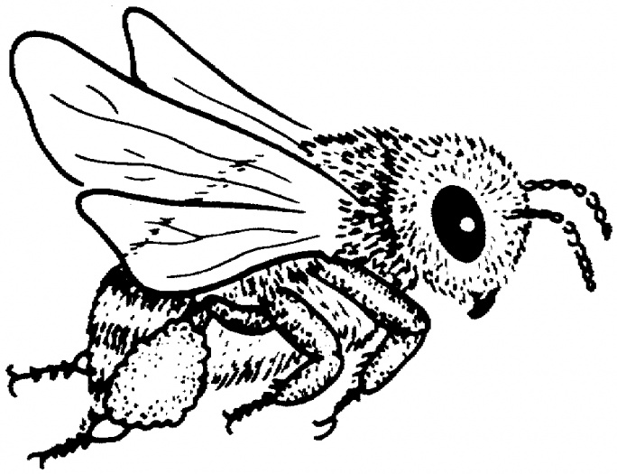 bees coloring pages bees coloring pages