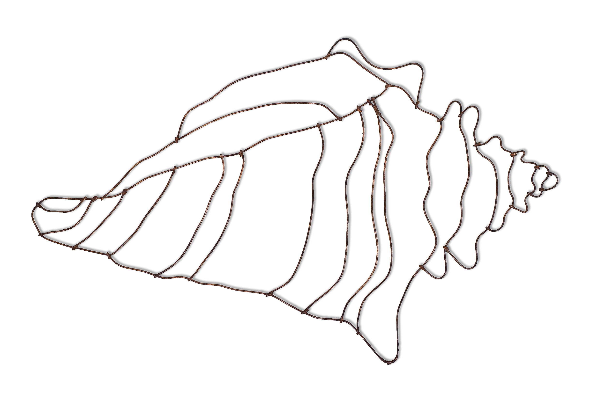Drawing Of A Conch