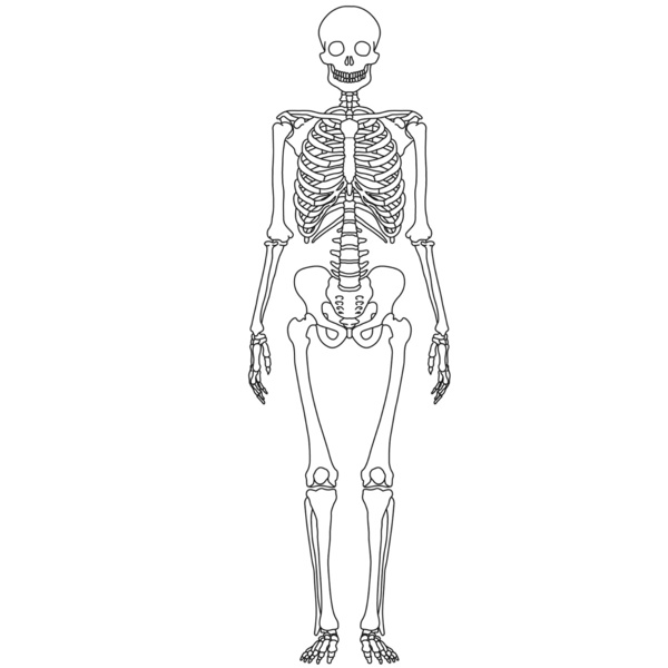 human skeleton diagram out labels  clipart best