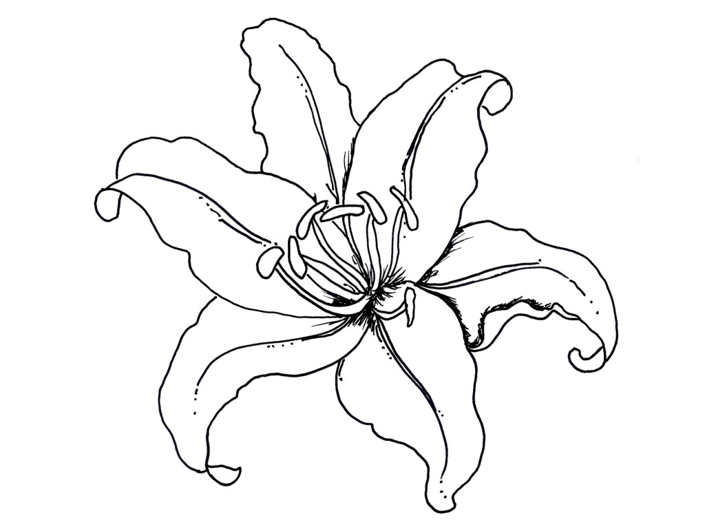 Tropical Rainforest Flowers Coloring Pages